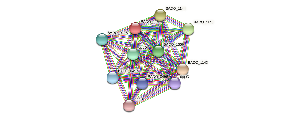 BADO_1142 protein (Bifidobacterium adolescentis) - STRING interaction network