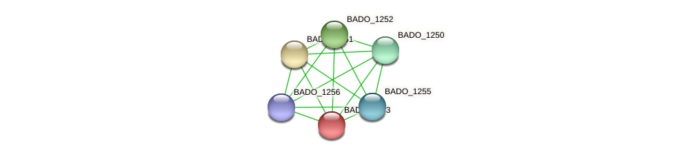 BADO_1253 protein (Bifidobacterium adolescentis) - STRING interaction network