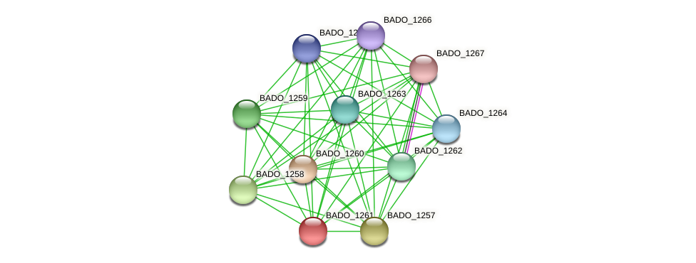 BADO_1261 protein (Bifidobacterium adolescentis) - STRING interaction network