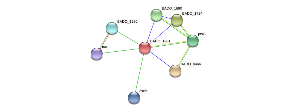 BADO_1281 protein (Bifidobacterium adolescentis) - STRING interaction network