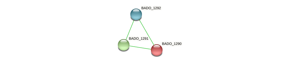 BADO_1290 protein (Bifidobacterium adolescentis) - STRING interaction network