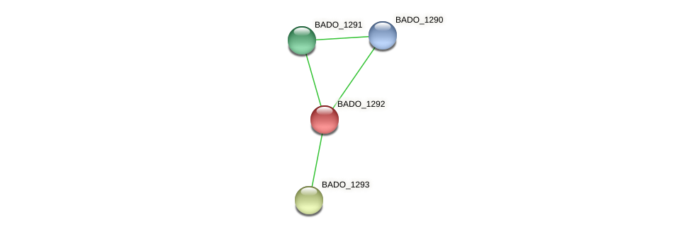 BADO_1292 protein (Bifidobacterium adolescentis) - STRING interaction network