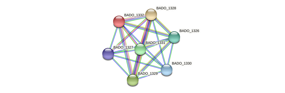BADO_1332 protein (Bifidobacterium adolescentis) - STRING interaction network