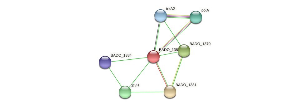 BADO_1380 protein (Bifidobacterium adolescentis) - STRING interaction network
