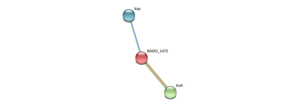 BADO_1472 protein (Bifidobacterium adolescentis) - STRING interaction network