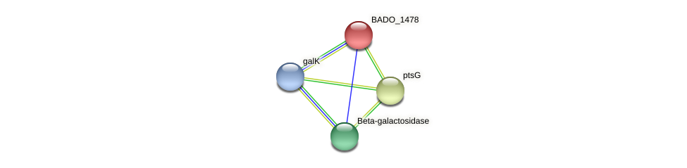 BADO_1478 protein (Bifidobacterium adolescentis) - STRING interaction network