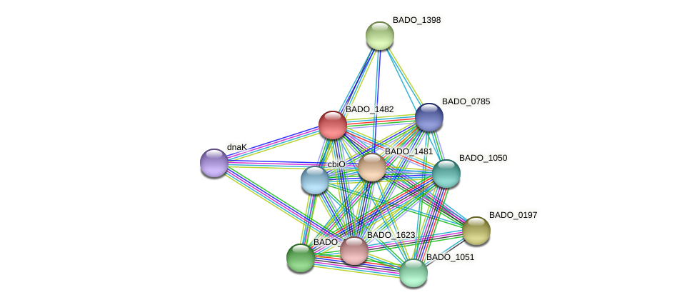 BADO_1482 protein (Bifidobacterium adolescentis) - STRING interaction network