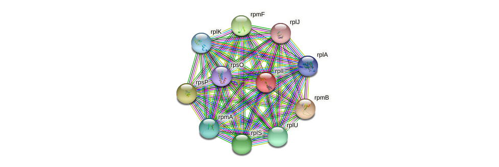 rplI protein (Bifidobacterium adolescentis) - STRING interaction network