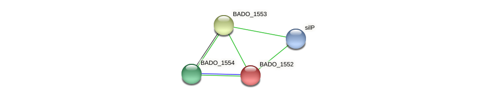 BADO_1552 protein (Bifidobacterium adolescentis) - STRING interaction network