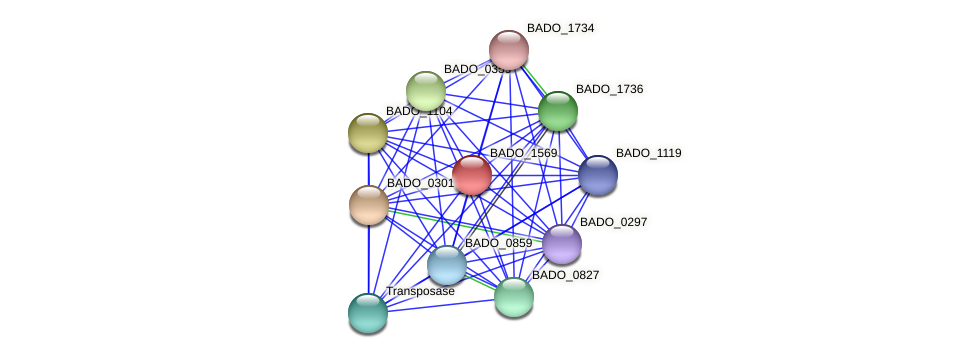 BADO_1569 protein (Bifidobacterium adolescentis) - STRING interaction network