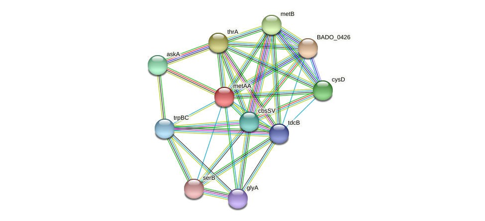 metAA protein (Bifidobacterium adolescentis) - STRING interaction network