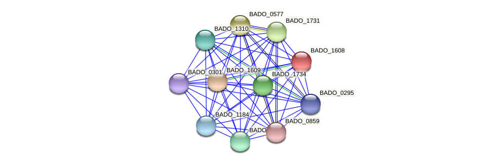 BADO_1608 protein (Bifidobacterium adolescentis) - STRING interaction network