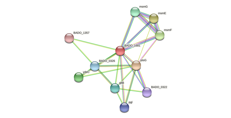 BADO_1681 protein (Bifidobacterium adolescentis) - STRING interaction network