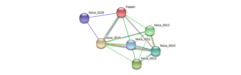 Noca_0014 protein (Nocardioides sp. JS614) - STRING interaction network