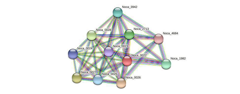 Noca_0022 protein (Nocardioides sp. JS614) - STRING interaction network