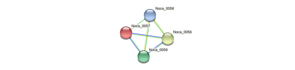Noca_0057 protein (Nocardioides sp. JS614) - STRING interaction network