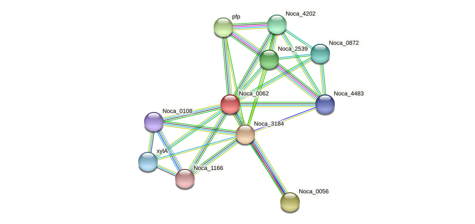 Noca_0062 protein (Nocardioides sp. JS614) - STRING interaction network