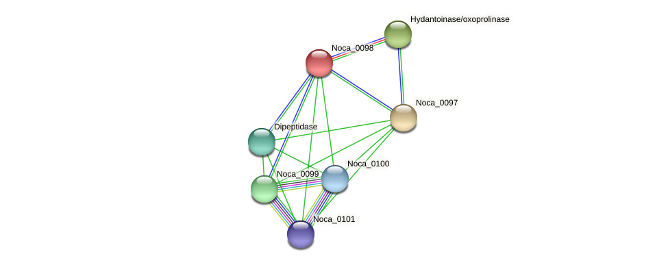 Noca_0098 protein (Nocardioides sp. JS614) - STRING interaction network
