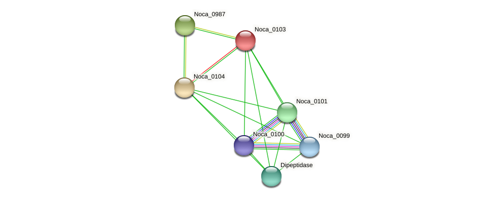 Noca_0103 protein (Nocardioides sp. JS614) - STRING interaction network