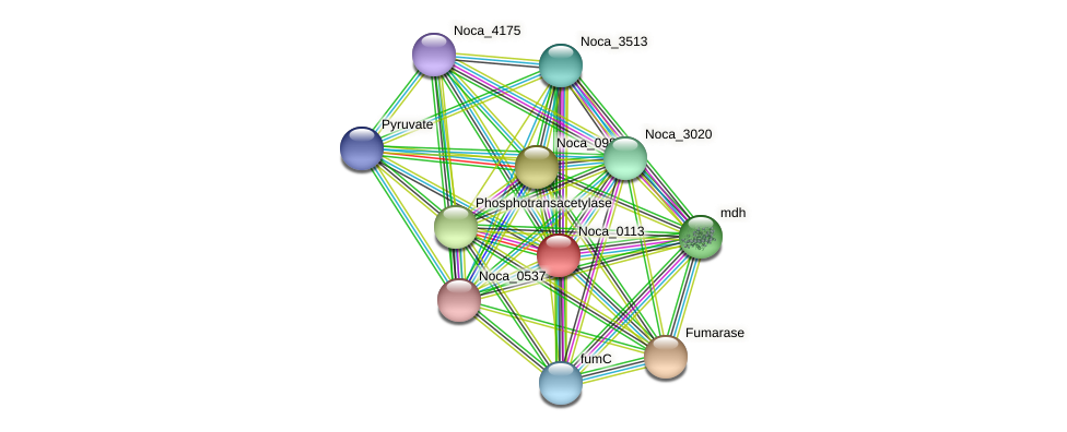 Noca_0113 protein (Nocardioides sp. JS614) - STRING interaction network