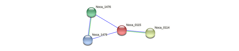 Noca_0115 protein (Nocardioides sp. JS614) - STRING interaction network