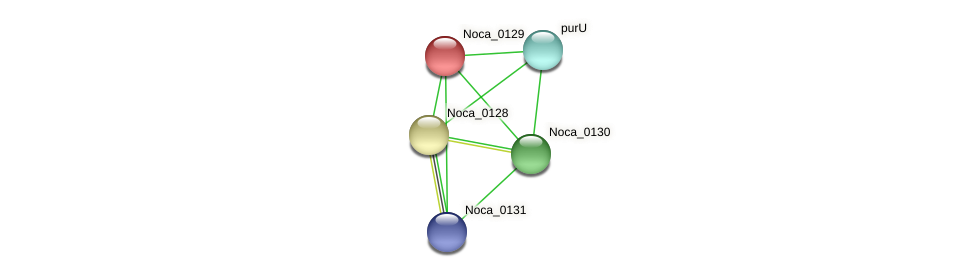 Noca_0129 protein (Nocardioides sp. JS614) - STRING interaction network