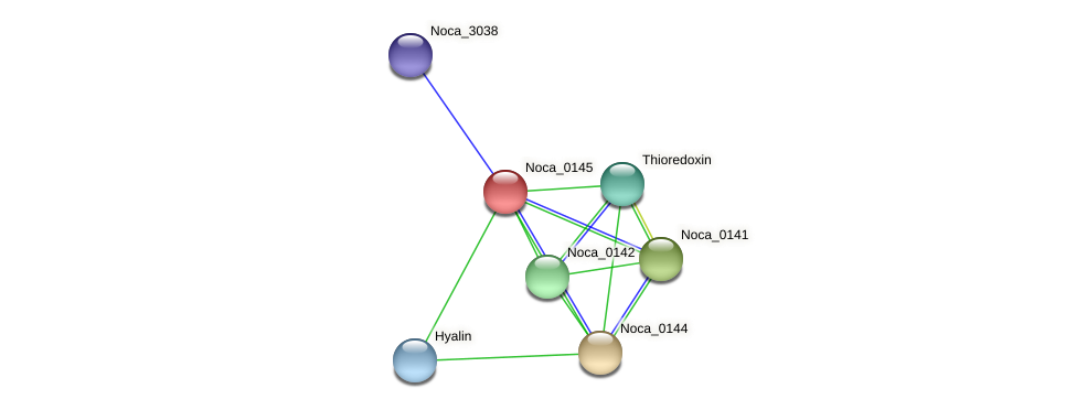 Noca_0145 protein (Nocardioides sp. JS614) - STRING interaction network