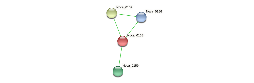 Noca_0158 protein (Nocardioides sp. JS614) - STRING interaction network