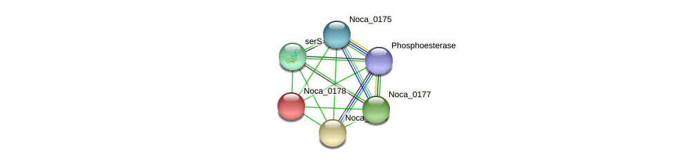 Noca_0178 protein (Nocardioides sp. JS614) - STRING interaction network