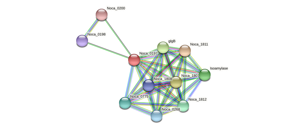 Noca_0197 protein (Nocardioides sp. JS614) - STRING interaction network