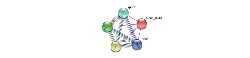 Noca_0213 protein (Nocardioides sp. JS614) - STRING interaction network