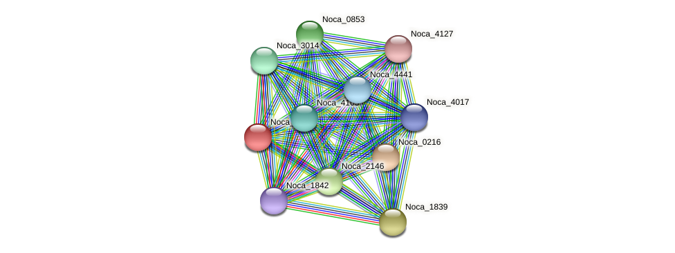 Noca_0217 protein (Nocardioides sp. JS614) - STRING interaction network
