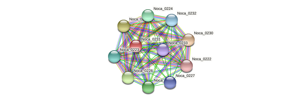 Noca_0231 protein (Nocardioides sp. JS614) - STRING interaction network