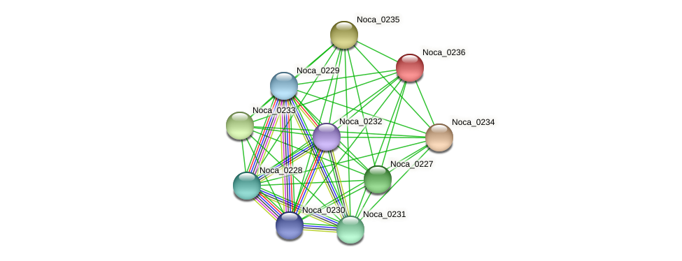 Noca_0236 protein (Nocardioides sp. JS614) - STRING interaction network