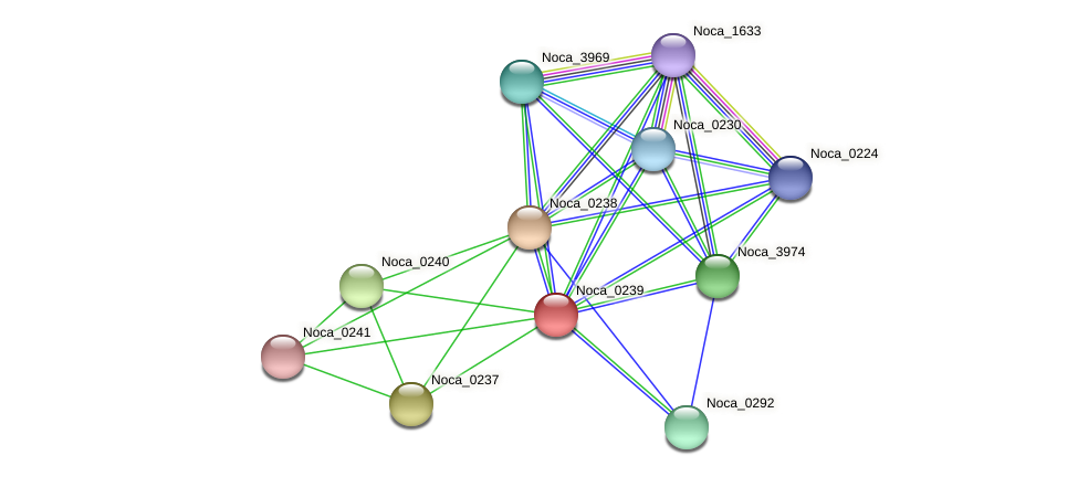 Noca_0239 protein (Nocardioides sp. JS614) - STRING interaction network