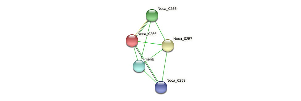 Noca_0256 protein (Nocardioides sp. JS614) - STRING interaction network