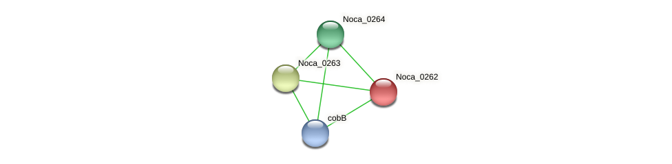 Noca_0262 protein (Nocardioides sp. JS614) - STRING interaction network
