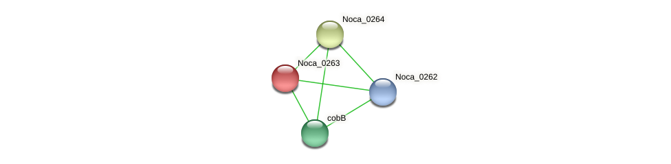 Noca_0263 protein (Nocardioides sp. JS614) - STRING interaction network