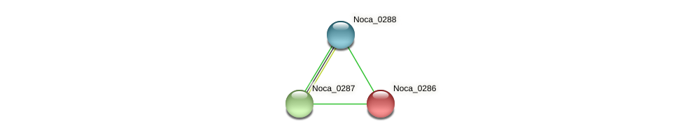 Noca_0286 protein (Nocardioides sp. JS614) - STRING interaction network