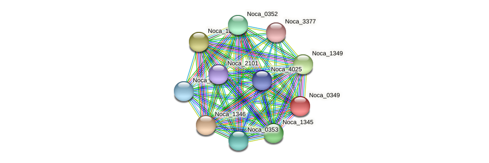 Noca_0349 protein (Nocardioides sp. JS614) - STRING interaction network