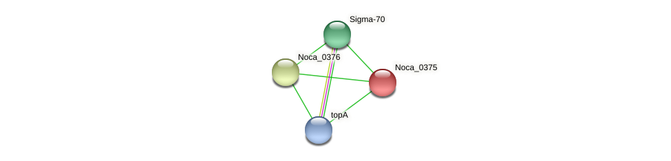 Noca_0375 protein (Nocardioides sp. JS614) - STRING interaction network