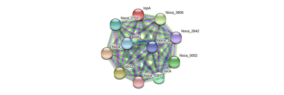 topA protein (Nocardioides sp. JS614) - STRING interaction network