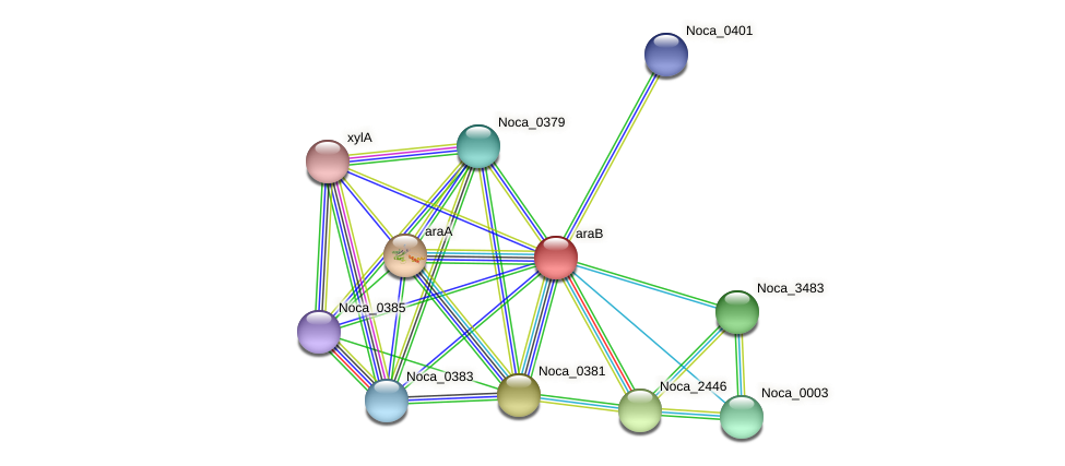 araB protein (Nocardioides sp. JS614) - STRING interaction network