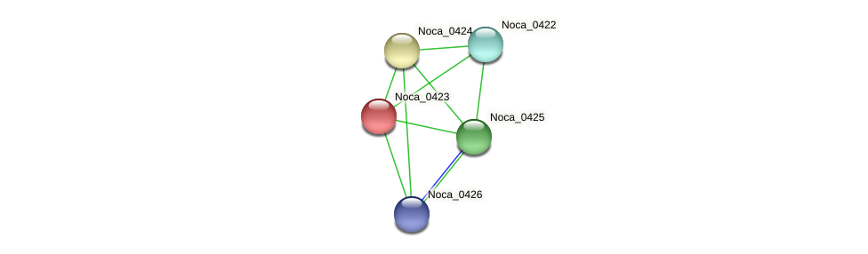 Noca_0423 protein (Nocardioides sp. JS614) - STRING interaction network