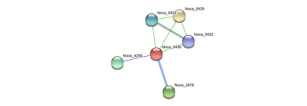 Noca_0430 protein (Nocardioides sp. JS614) - STRING interaction network