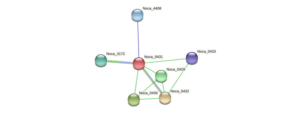 Noca_0431 protein (Nocardioides sp. JS614) - STRING interaction network