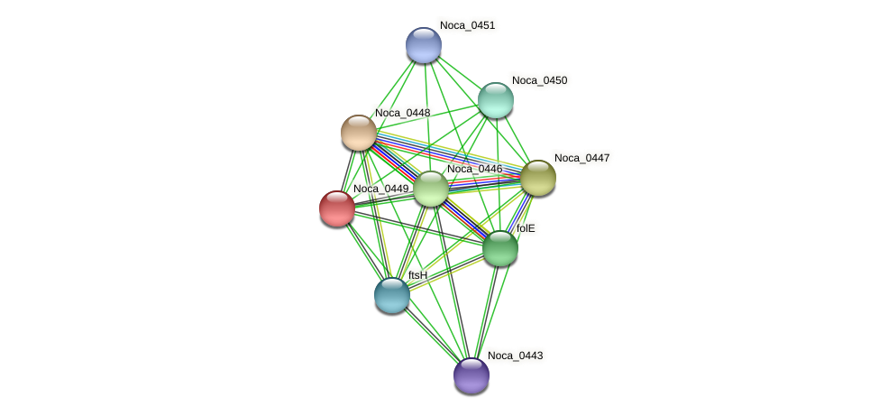 Noca_0449 protein (Nocardioides sp. JS614) - STRING interaction network