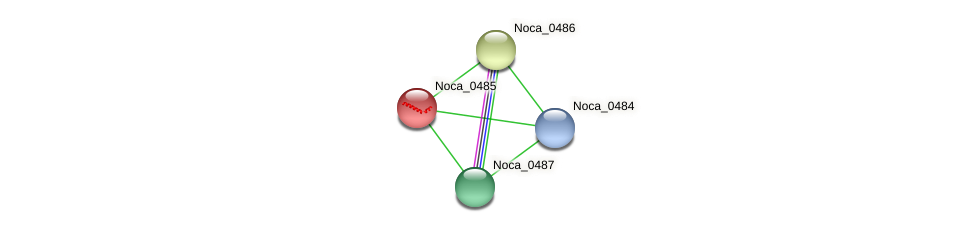 Noca_0485 protein (Nocardioides sp. JS614) - STRING interaction network