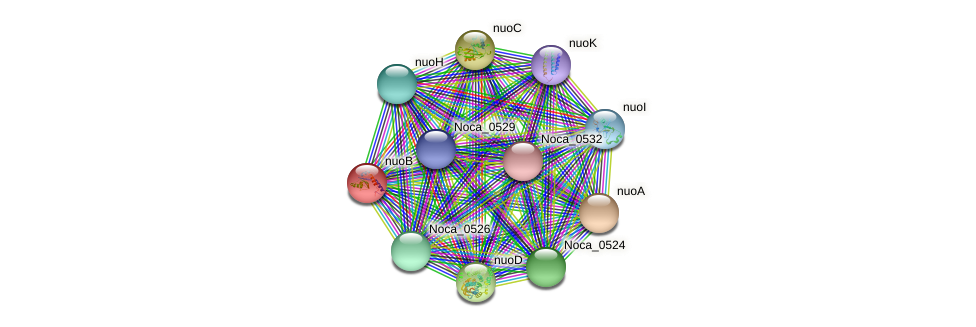 nuoB protein (Nocardioides sp. JS614) - STRING interaction network