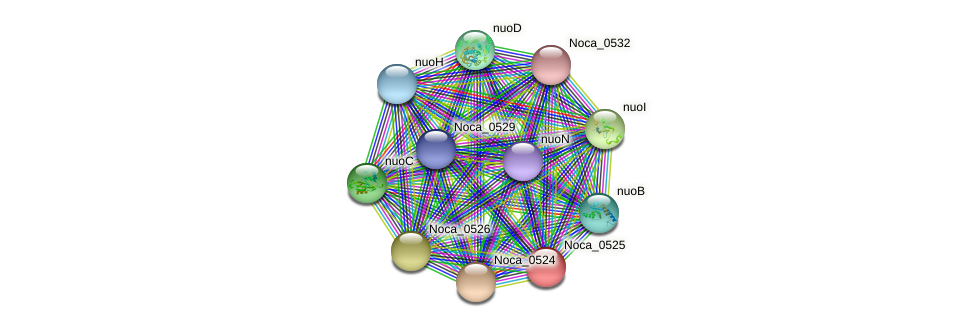 Noca_0525 protein (Nocardioides sp. JS614) - STRING interaction network